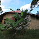 Yvy Porã - permaculture station