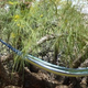 The Joshua Tree Homestead Permaculture Experiment